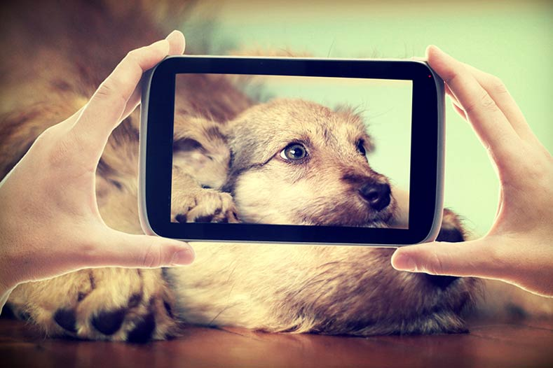 Taking a video of your dog