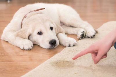 Puppy Potty Training Timeline