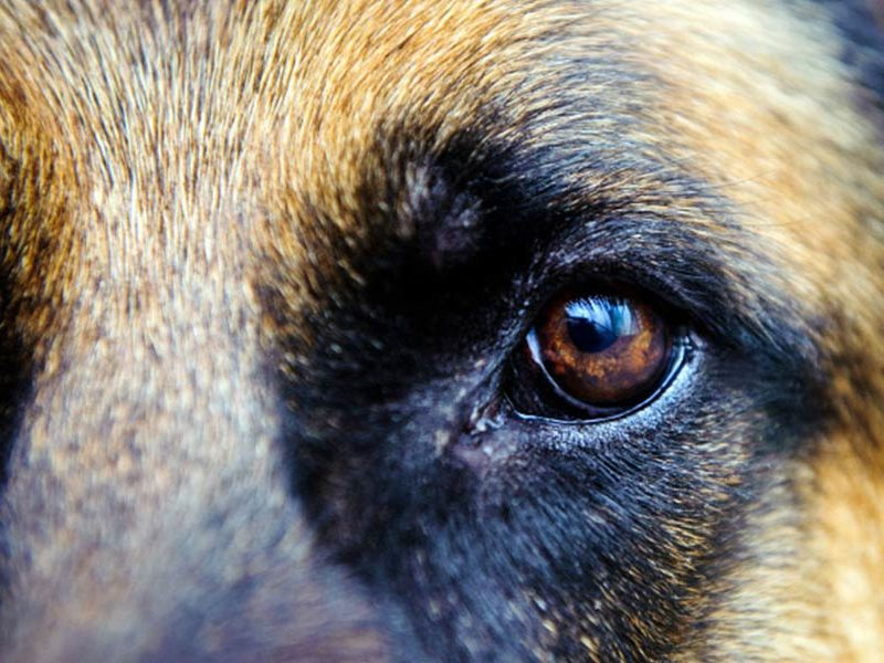 Managing the Problems of Older Dogs
