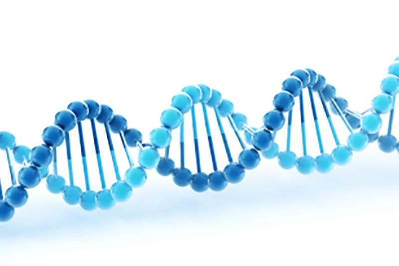 breeding to predetermine sex