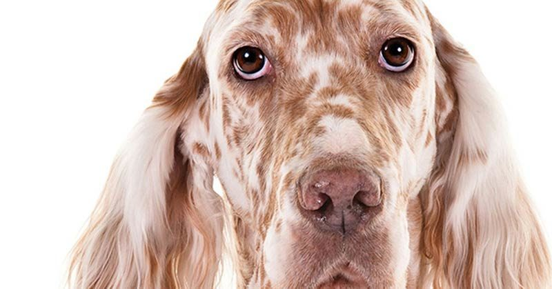 treating your dogs ibd