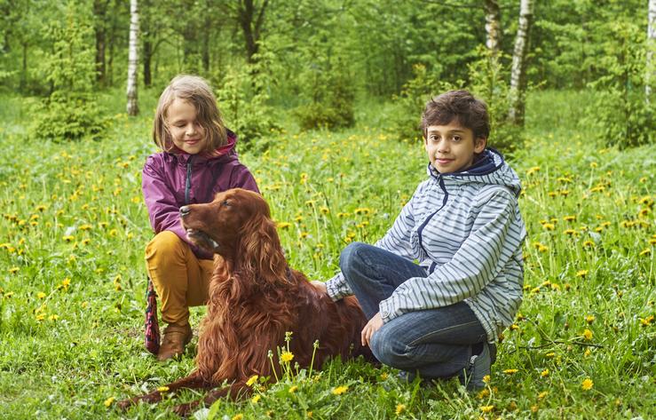 10 raças de cachorro ideais para famílias com crianças 6