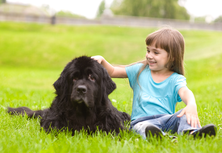 10 raças de cachorro ideais para famílias com crianças 8