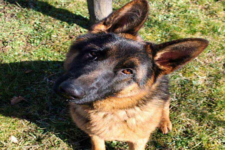 can dogs eat yogurt hero