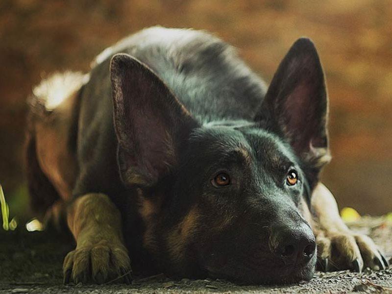 Training the Fearful Dog