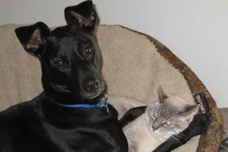 Dog Chases Cat Dogs And Cats Living Together American Kennel Club