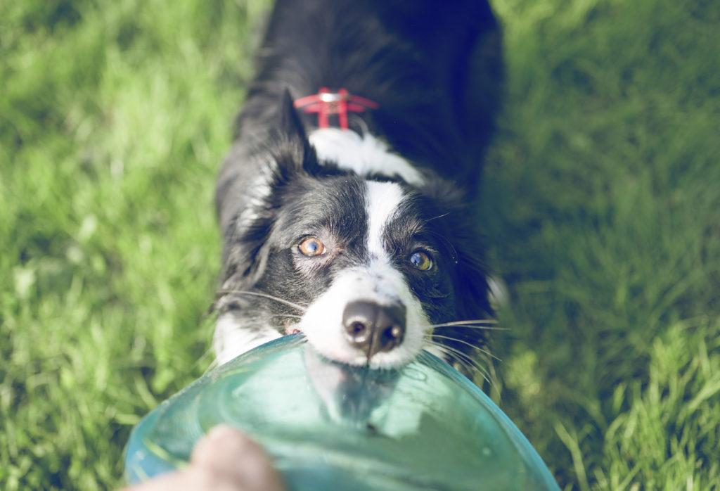 How to Teach a Dog to Fetch: Training Your Dog to Play Fetch