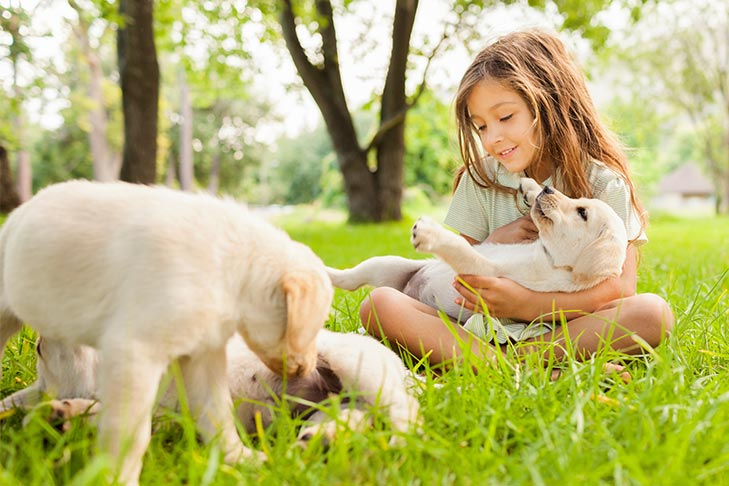 Puppy Socialization: How to Socialize a Puppy