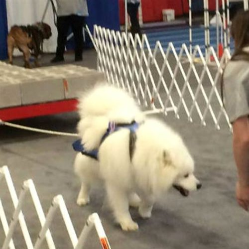 This Secret From The Worlds Strongest Dogs Can Improve Your