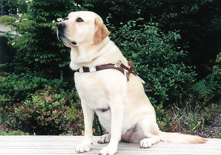 guide dog roselle