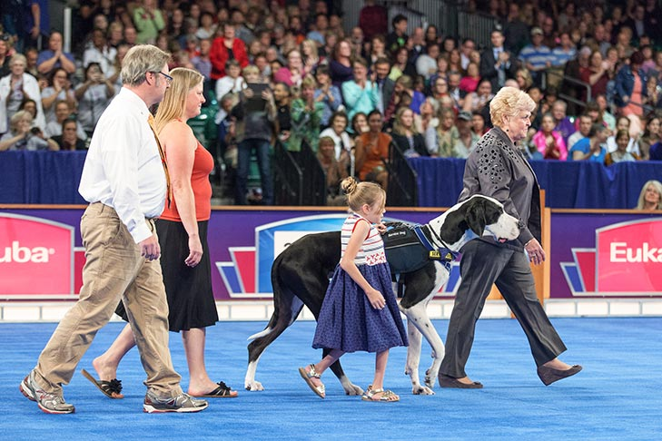 "Service Dog: ""George,"" a Great Dane owned by Rachel Burton."
