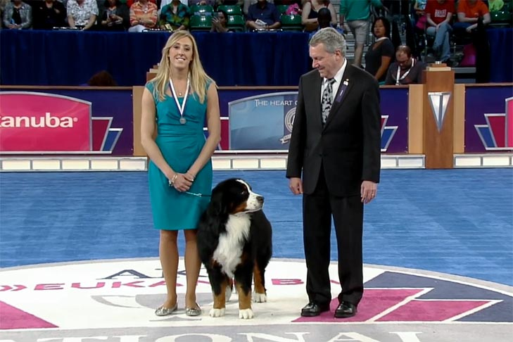 "Exemplary Companion Dog: ""Mufasa,"" a Bernese Mountain Dog owned by Kristen and Robin Greenwood."