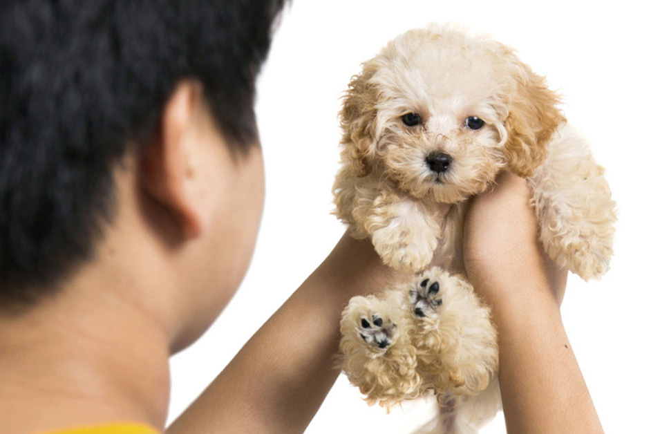 Preparing a Contract for Puppy Buyers – American Kennel Club