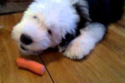 Puppies vs. Carrots: An Epic Battle of Cuteness