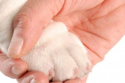 how to pick dog nail clippers