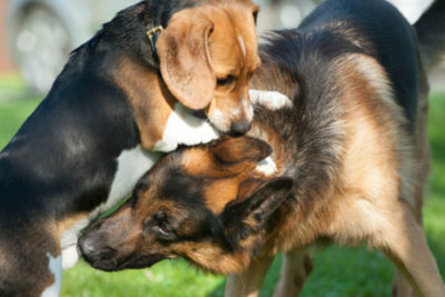 Are these dogs playing or fighting