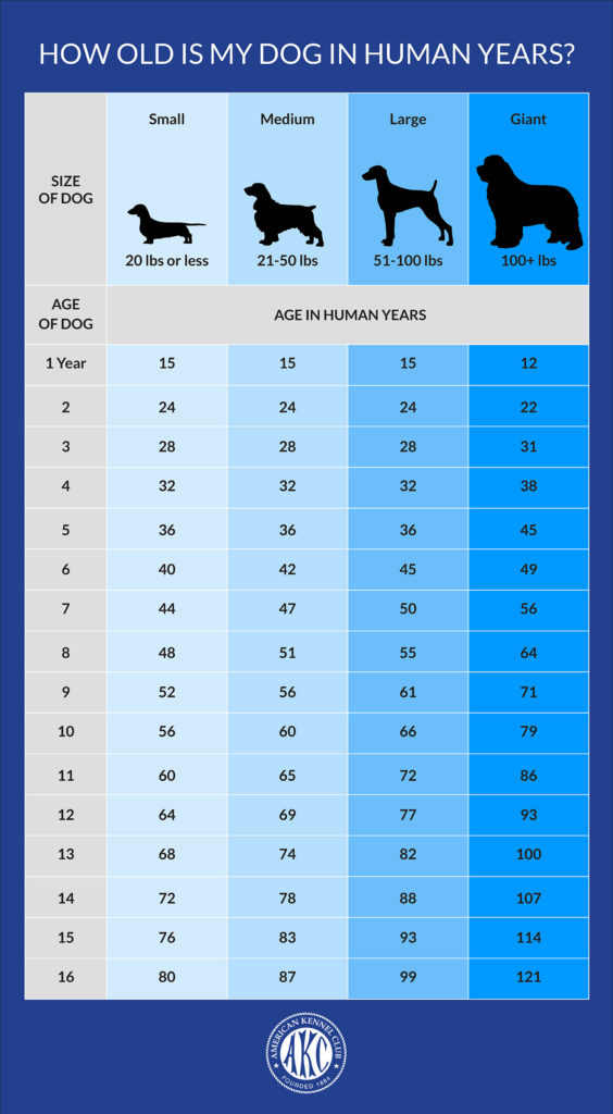How Old is My    Dog    in Human    Years        Dog    to Human    Years       Chart