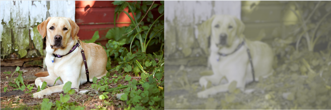 Are Dogs Color Blind? Side-by-Side Views – American Kennel Club