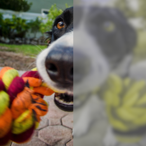 Are Dogs Color Blind Side By Side Views American Kennel Club
