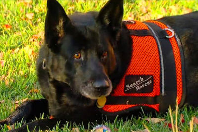 Heidi the Search and Rescue dog