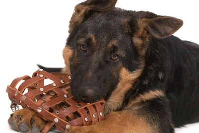 dog muzzles and how to use one