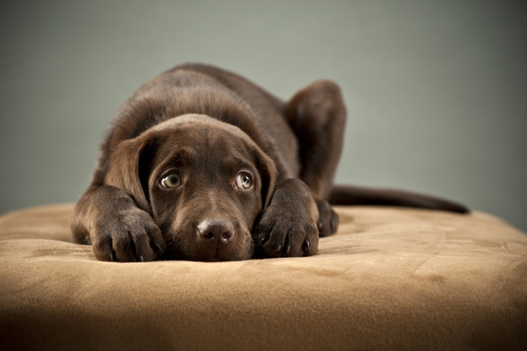 Puppy Separation Anxiety How To Help A Puppy With Separation Anxiety