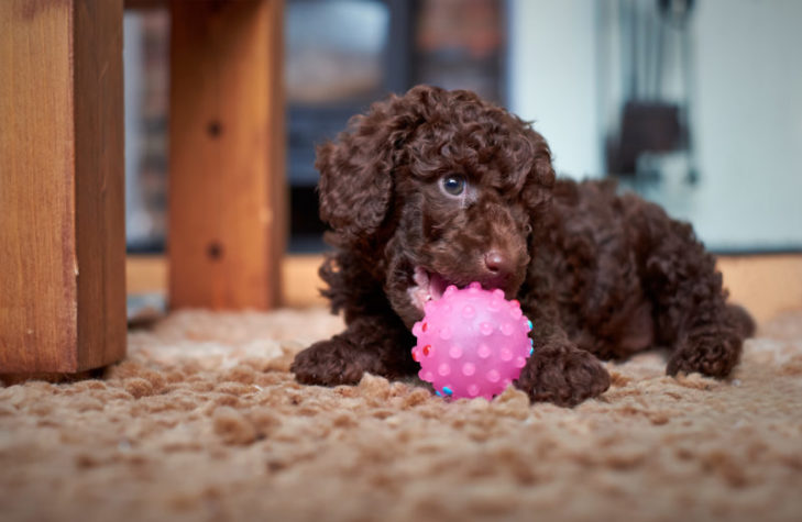 How To Stop Puppy Biting Tips For Training Your Puppy To
