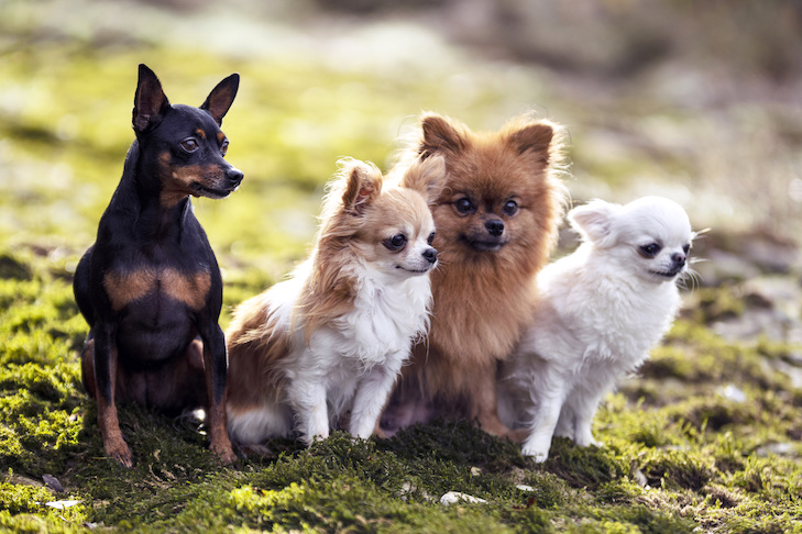 picture of dogs in the nature, in autumn