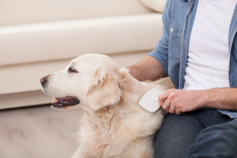 Dog Shedding: What to Expect And How to Manage It