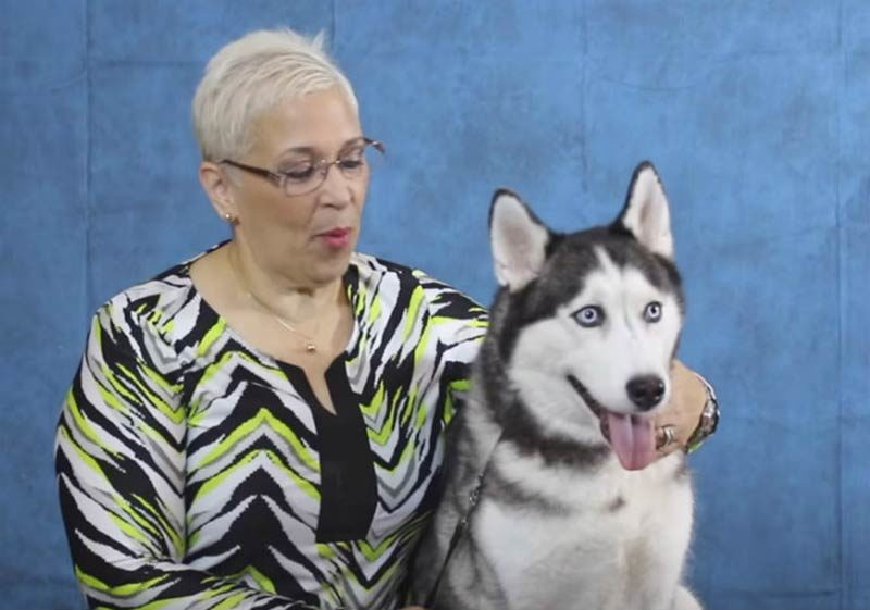 Puerto Rico dogs