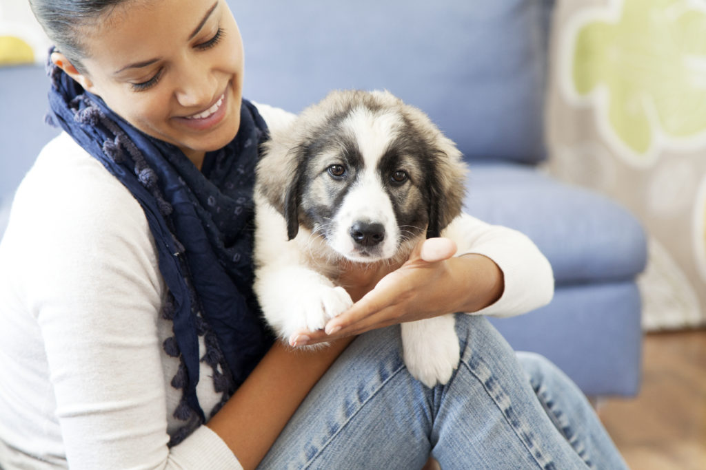 Young woman with a Great Pyrenees puppy on her lap.