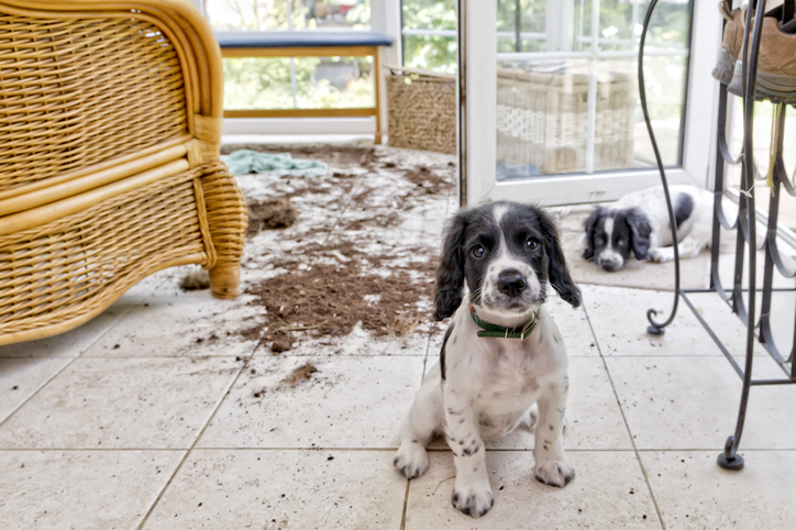 two puppies cause mess in house