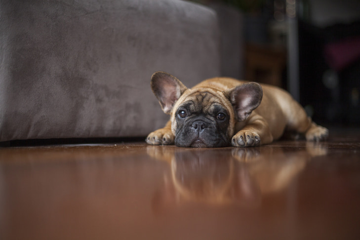 How To Spot A Sick Puppy: Illness Warning Signs To Watch For In Puppies