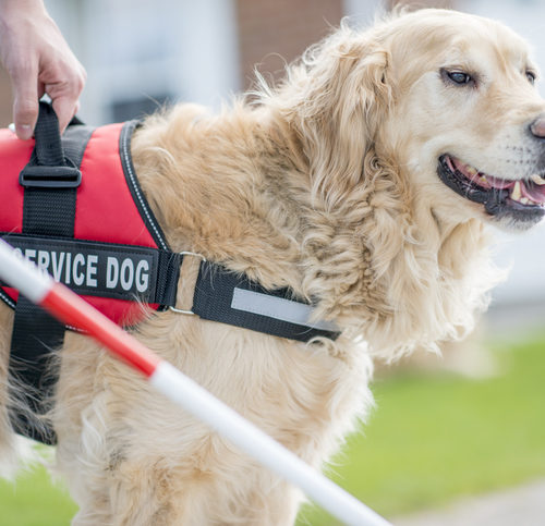 Service Dogs 101: Everything You Need To Know About Service Dogs