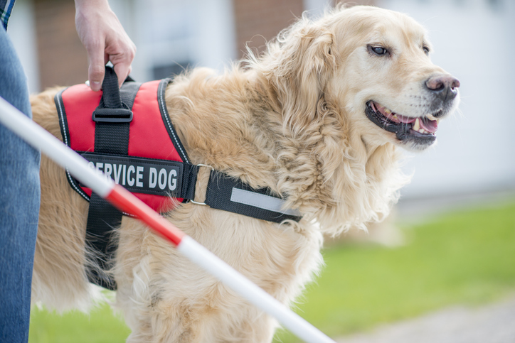 Service Dogs 101 Everything You Need To Know About Service Dogs