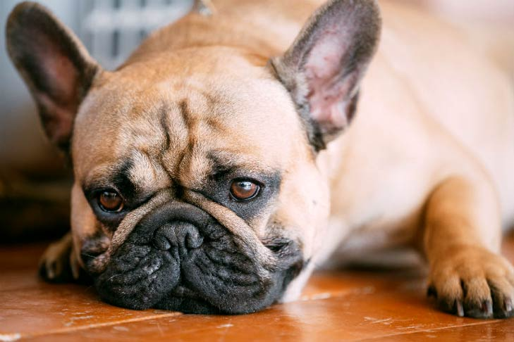 Dog Whining: Why Do Dogs Whine?