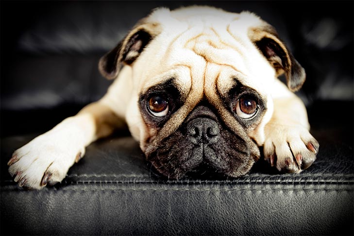 Dog Anxiety What Dog Owners Need To Know