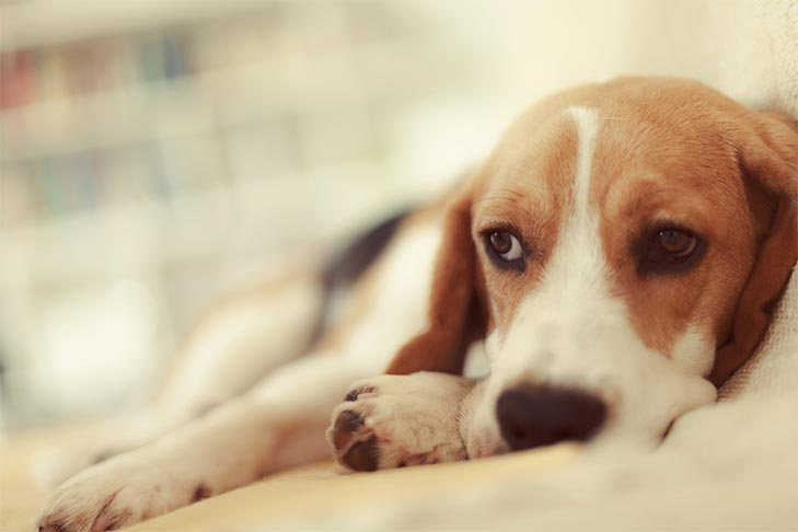 Dog Flu: Symptoms, Treatment, and Prevention for Canine