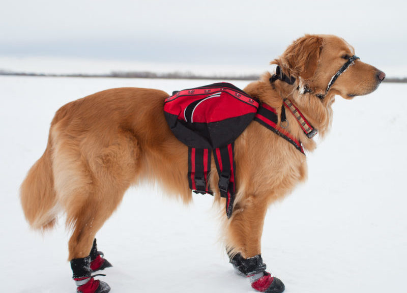 Top 6 Dog Boots For Winter Cold Weather American Kennel Club