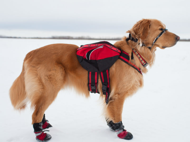 e001eb6822 Top 9 Dog Boots for Winter & Cold Weather – American Kennel Club