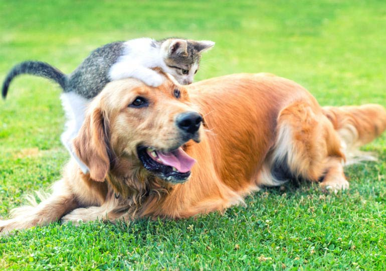 Can Dogs Eat Cat Food? Is Cat Food Bad For Dogs? Dog Eating Cat Food