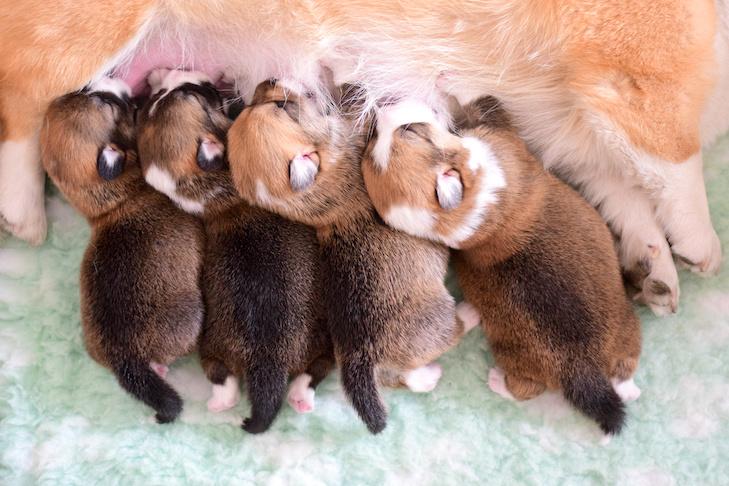 como criar cachorros recien nacidos