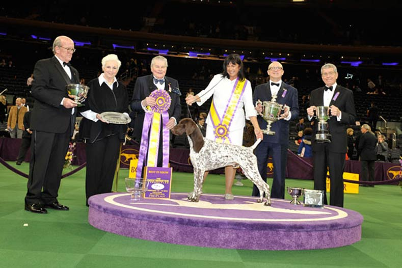 Westminster Best in Show Winner 2016: GCh. Vjk-Myst Garbonita's California Journey