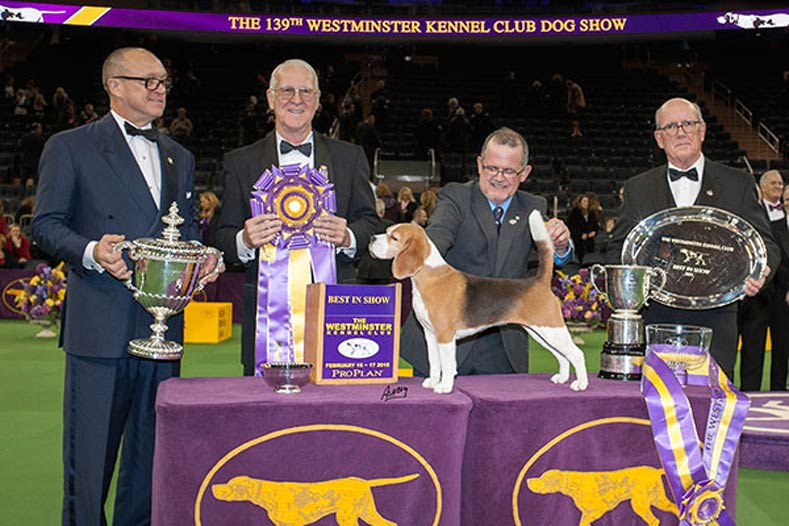 Westminster Best in Show Winner 2015: Ch. Tashtins Lookin For Trouble