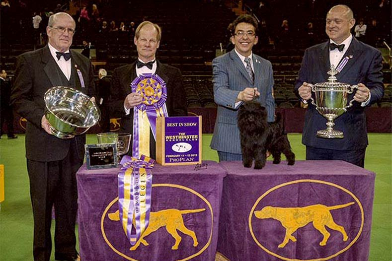 Westminster Best in Show Winner 2013: GCh. Banana Joe V Tani Kazari