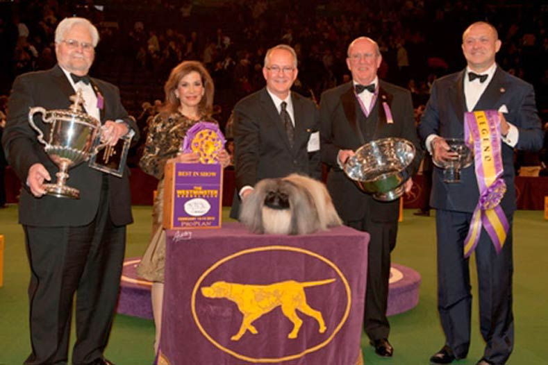 Westminster Best in Show Winner 2012: GCh. Palacegarden Malachy