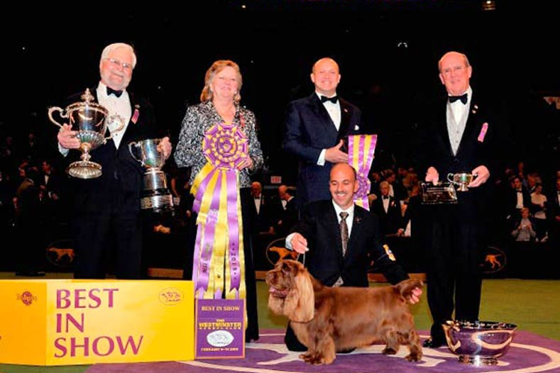 Westminster Best in Show Winner 2009: Ch. Clussexx Three D Grinchy Glee