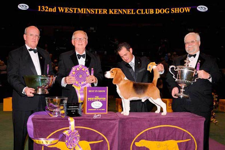 Westminster Best in Show Winner 2008: Ch. K-Run's Park Me In First
