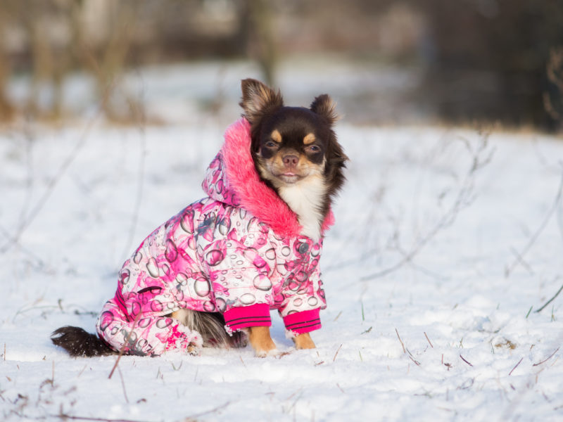 Dog Sweaters Check Out The Best Options For Every Type Of Dog