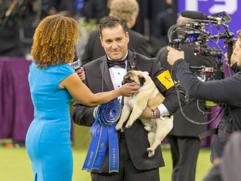 Watch Westminster Dog Show 2020.How To Watch The 2019 Westminster Kennel Club Dog Show